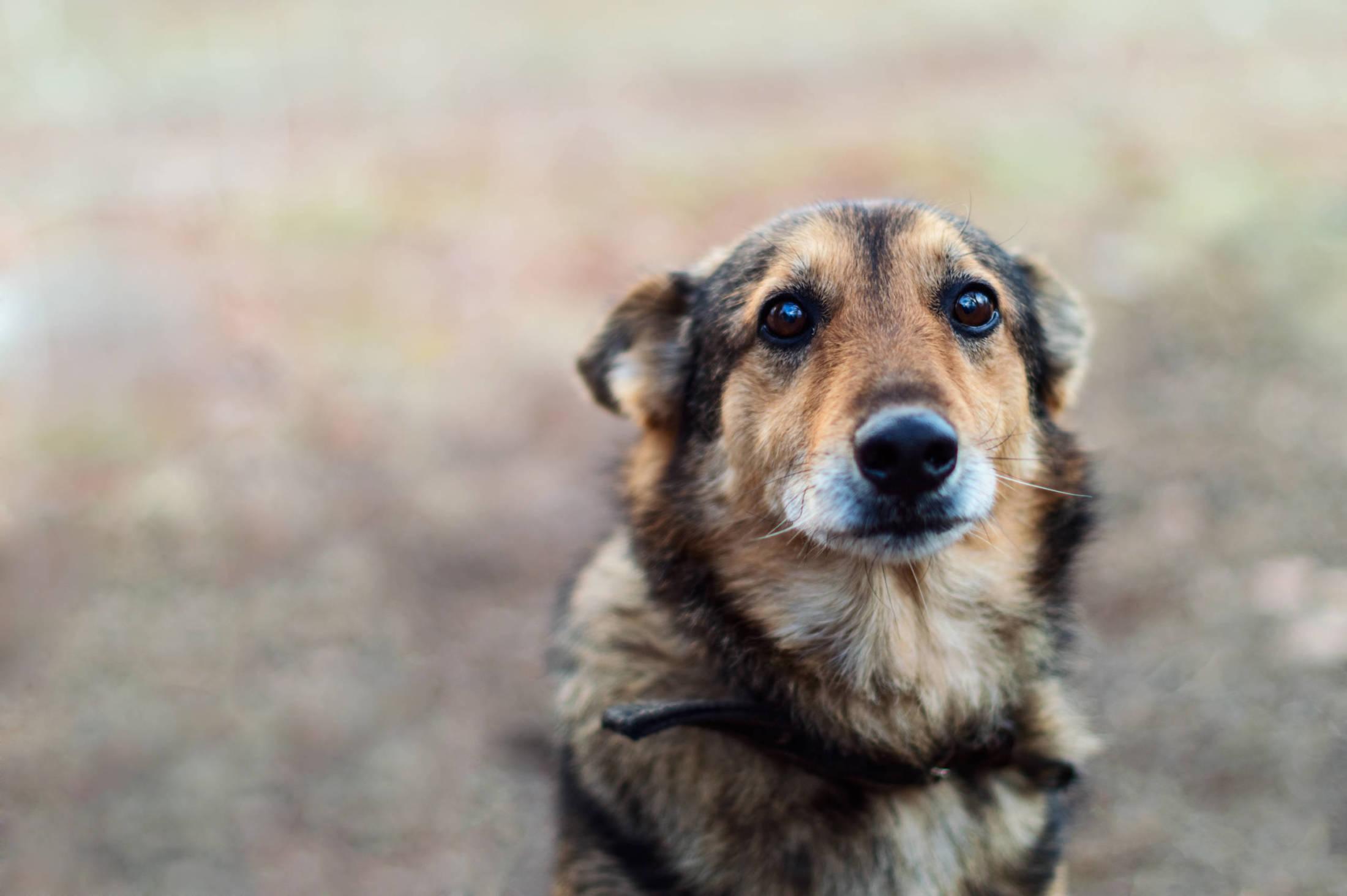 Cukrzyca u psa. Jak leczyć?