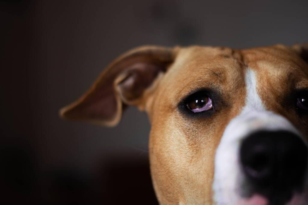 padaczka u psa objawy