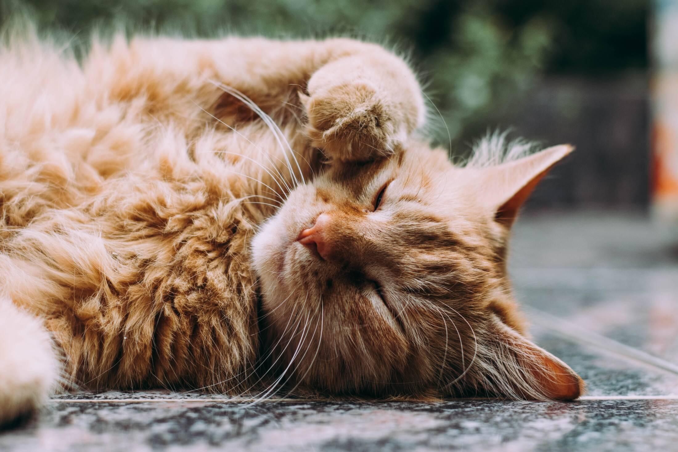 """""""Mój kot ma problemy żołądkowe"""". Olej CBD może pomóc"""