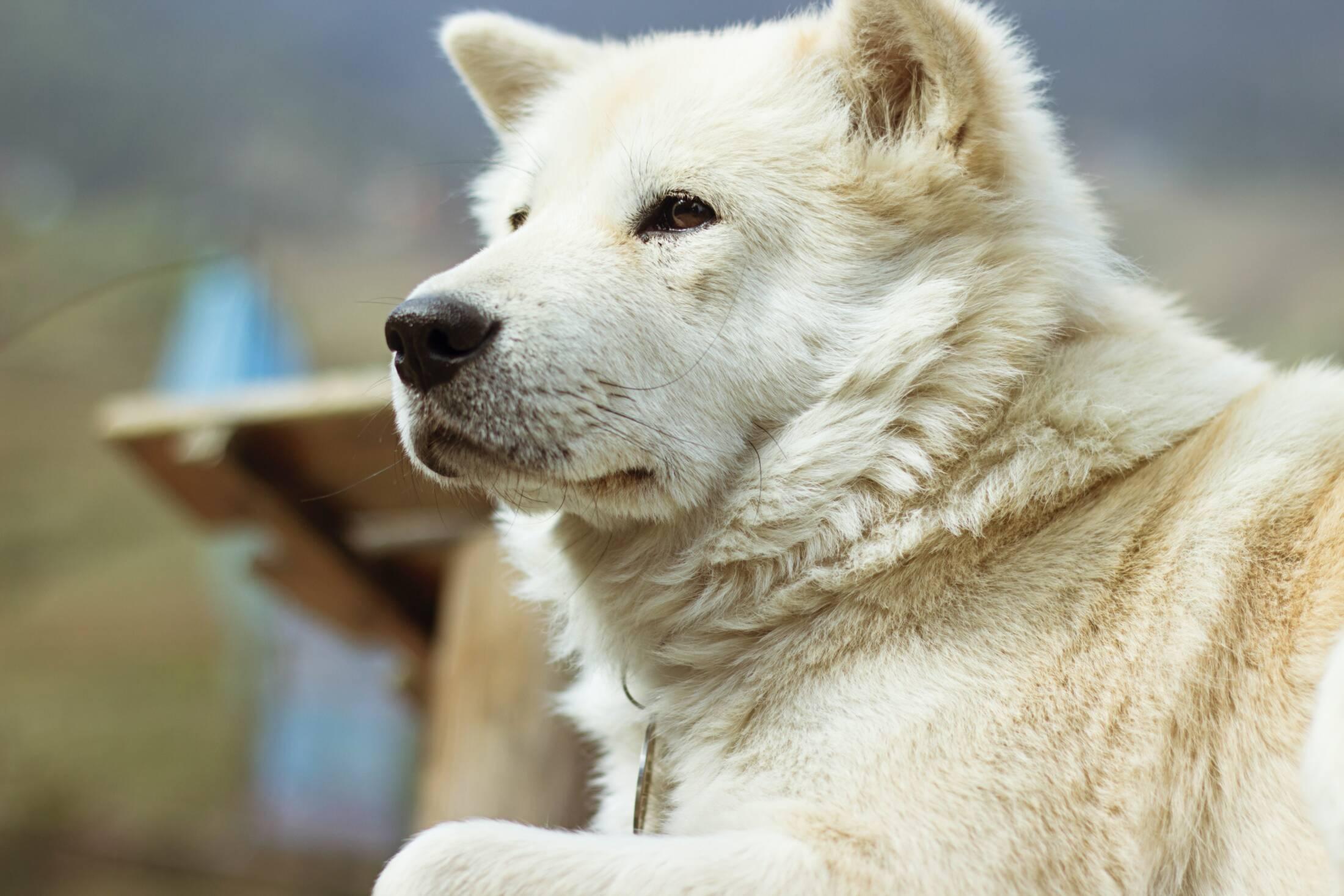 Podajesz psu glukozaminę? Odkryj substancję, która jest jeszcze lepsza